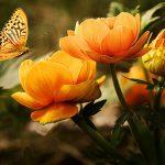 Tipps, die Ihnen helfen, über organische Gartenarbeit zu lernen